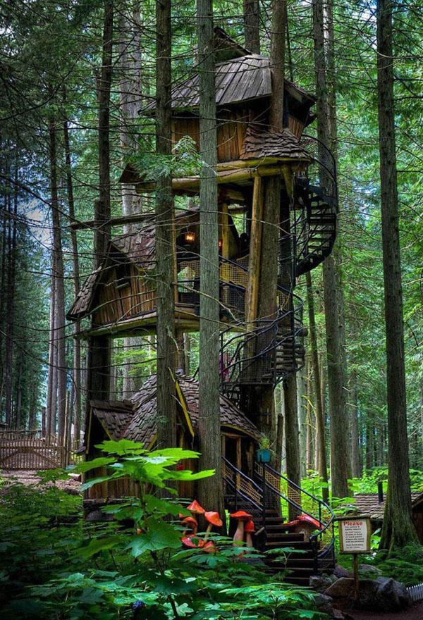 trên cùng của ngôi nhà trên cây
