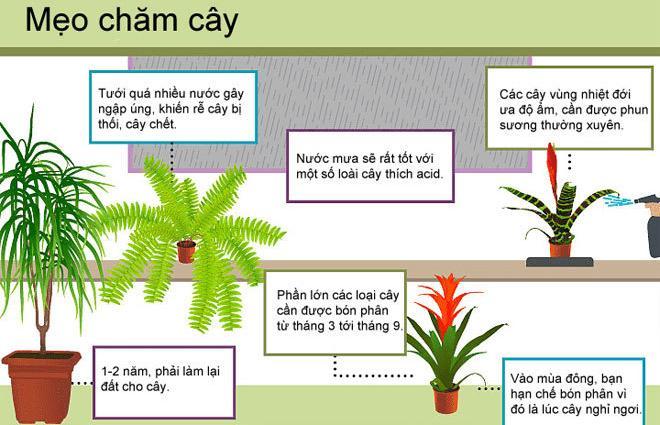 Một số mẹo chăm cây hữu hiệu