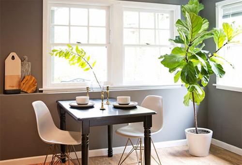 cây xanh trong nhà.