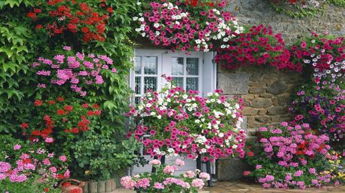 Những loài hoa được khuyên trồng đó là sen, ngọc thảo, dạ yến thảo...vì thời gian nở hoa của chúng tương đối dài