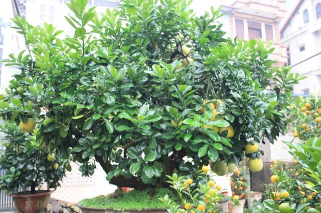 Những cây nên trông trong sân nhà