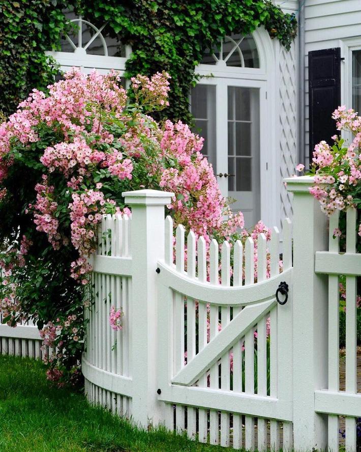 hàng rào trắng lãng mạn