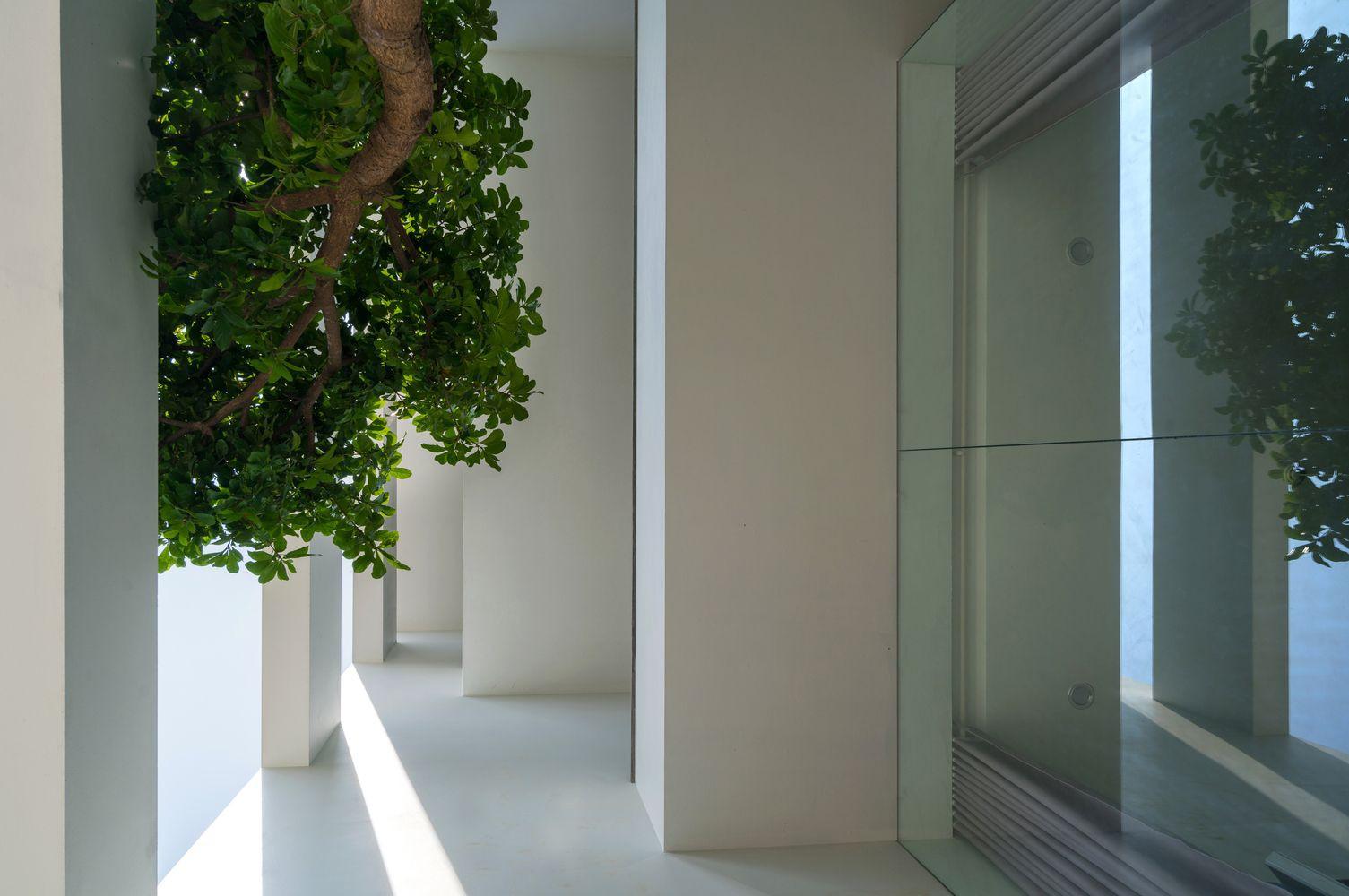 Hình ảnh cận cảnh không gian bên trong nhà phố với cành cây lớn, khung cửa kính trong suốt