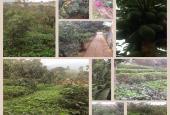 Cần bán nhà vườn, 10.000m2, tại xã Trần Phú, huyện Chương Mỹ, TP Hà Nội