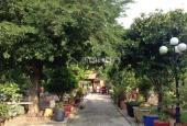 Bán nhà vườn đẹp 10.000 m2 nhiều cây ăn trái, ao, xã Nhị Thành, huyện Thủ Thừa, Long An giá 6 tỷ