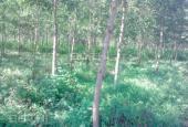 Bán đất Đơn Dương Lâm Đồng giá rẻ 138ha-4,8 tỷ