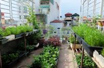 Sân thượng nhà phố biến thành vườn rau, quả xanh tốt