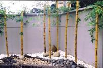 Trồng cây đúng hướng phong thủy để mang lại tài lộc