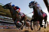 Dự án trường đua ngựa 1,5 tỷ USD tại Vĩnh Phúc được chấp thuận