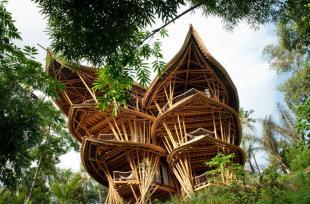 Kiến trúc độc đáo của căn biệt thự tre