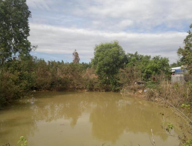 Bán vườn Thanh Long 2100 trụ tại xã Hàm Kiệm, Hàm Thuận Nam 7564976