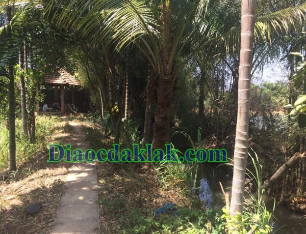 Bán nhà vườn DT 4,350m2 Nguyễn Thị Định có ao cá, cây ăn trái, nhà sàn gỗ hương 7566001