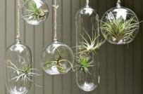 Mang cây xanh vào nhà với những ý tưởng vô cùng sáng tạo