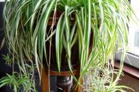 7 loại cây nội thất dễ trồng, dù không được chăm bón vẫn xanh tốt