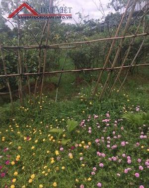 Chính chủ cần bán nhà vườn tại xã Phú Lão, Huyện Lạc Thủy, tỉnh Hòa Bình