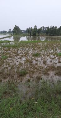 Chính chủ kẹt tiền đáo hạn ngân hàng bán lỗ lô đất 5x33m, huyện Đức Hòa, giá 549 triệu