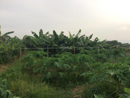 Bán lô đất 95,2 m2 vườn tại thôn An Hạ, An Thượng, Hoài Đức - Hà Nội