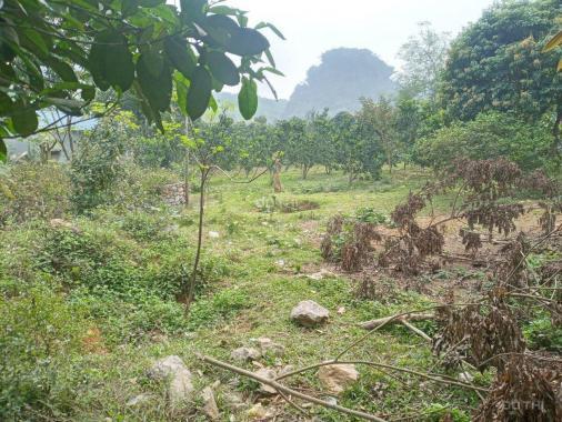 Cần bán 1.500m2 đất thổ cư bám mặt đường liên xã tại Lương Sơn, Hòa Bình