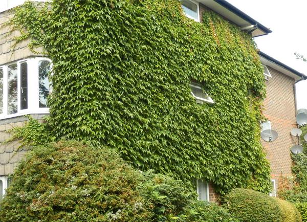 trồng cây chống nắng cho nhà hướng Tây