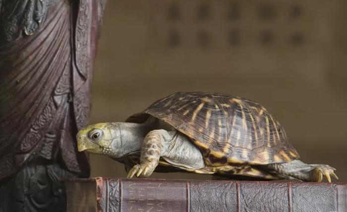 tượng rùa phong thủy
