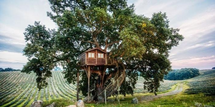 Nhà trên cây cách mặt đất 7m, tọa lạc giữa khung cảnh thiên nhiên xanh mướt mát.