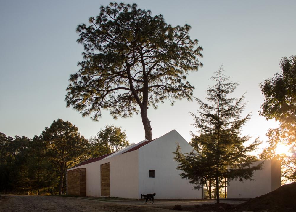 nhà bao quanh cây