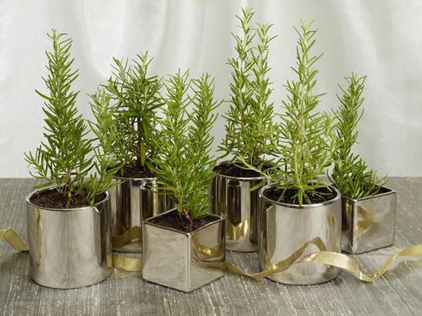 sai lầm khi cách trồng cây trong nhà