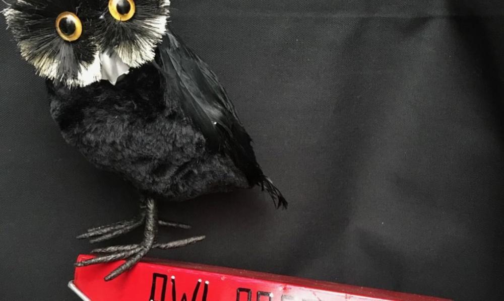 chú cú Even Hedwig