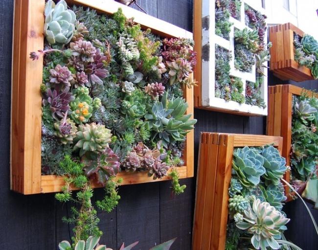 trồng cây trong khung gỗ