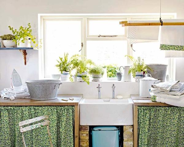 cây gia vị trong phòng bếp