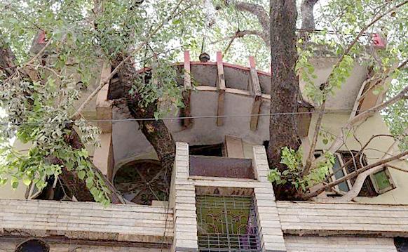 Ngôi nhà 4 tầng bao quanh cây cổ thụ độc đáo