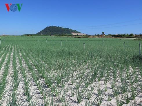 bán đất nông nghiệp Lý Sơn