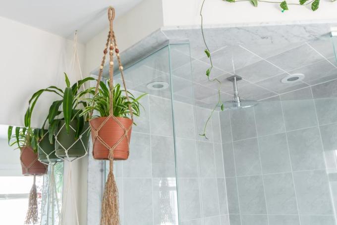 vườn treo trong phòng tắm