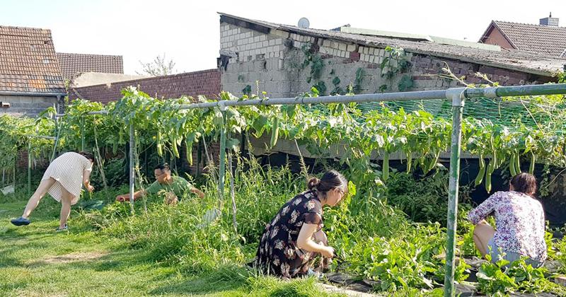 khu vườn xanh mát của người Việt ở Đức