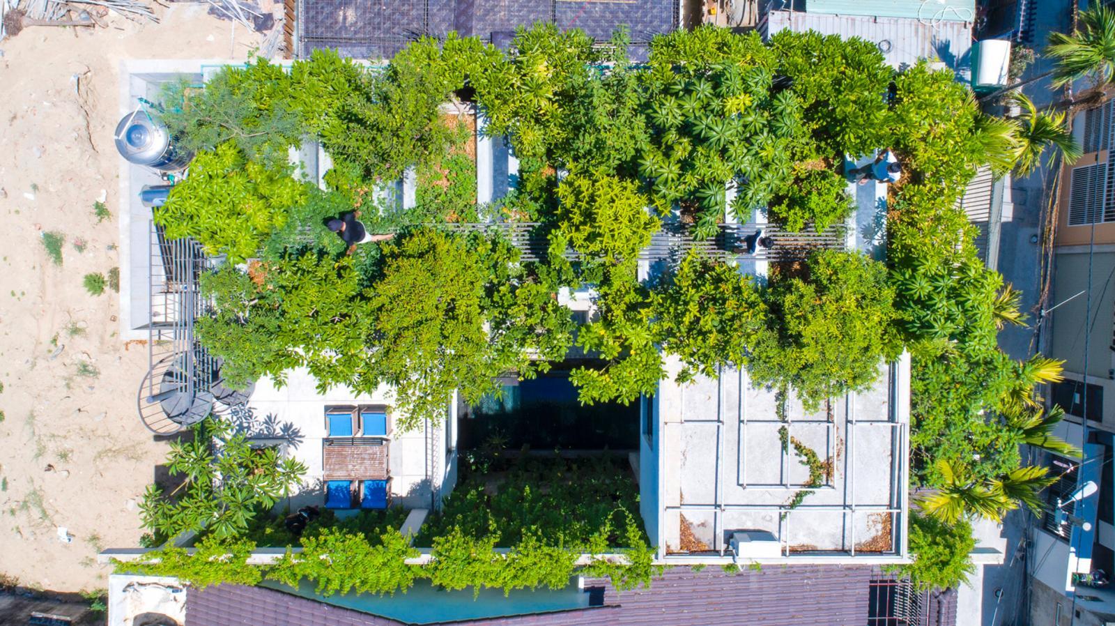 KTS Võ Trọng Nghĩa trồng cây xanh trên mái nhà