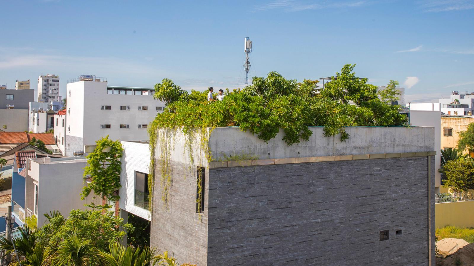 Hình ảnh một góc Nhà Thắng nhìn từ xa với tường bê tông màu xám, sân thượng phủ đầy cây xanh