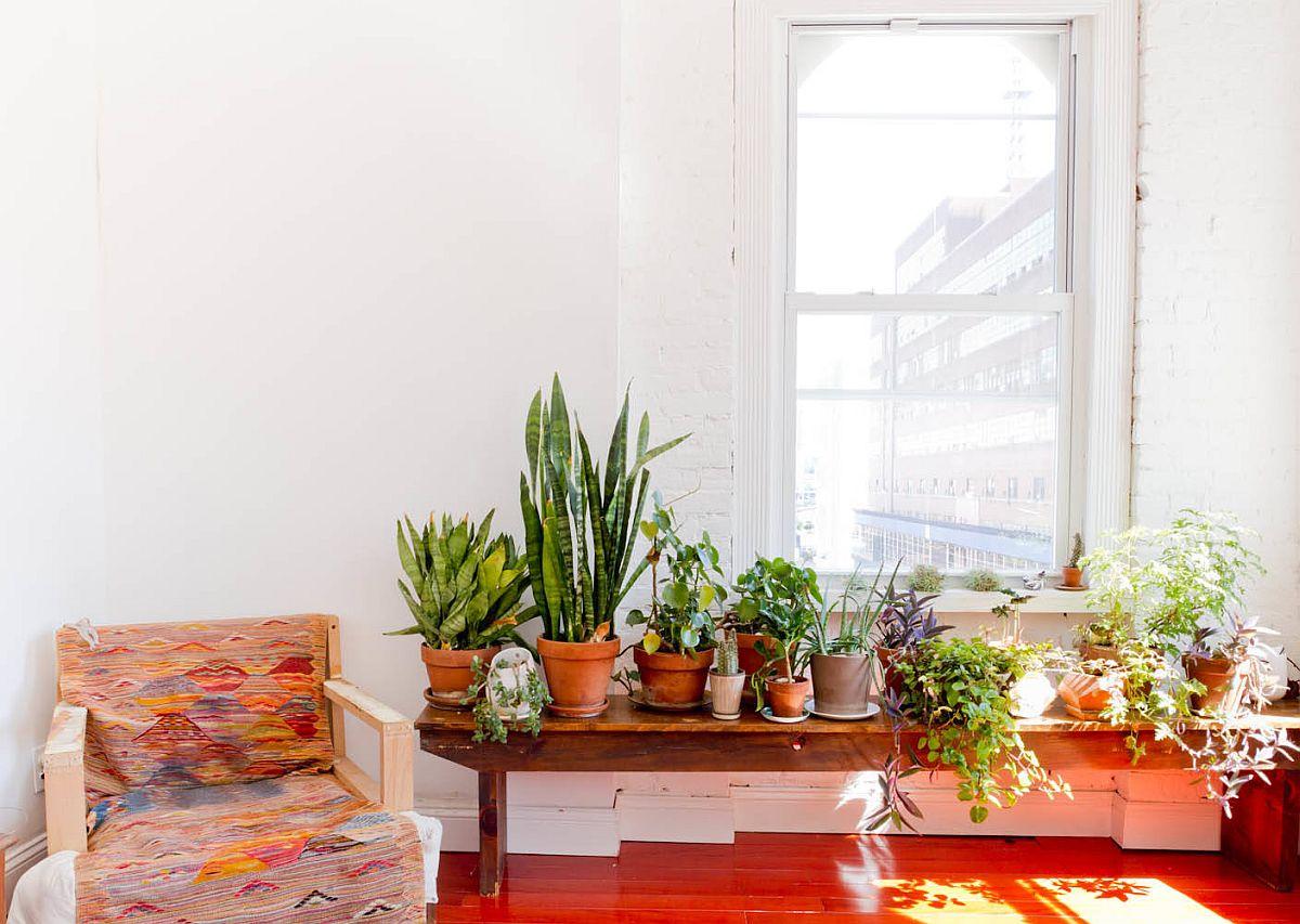 Hình ảnh cận cảnh bộ sưu tập chậu cây đất nung trang trí phòng khách chiết trung hiện đại