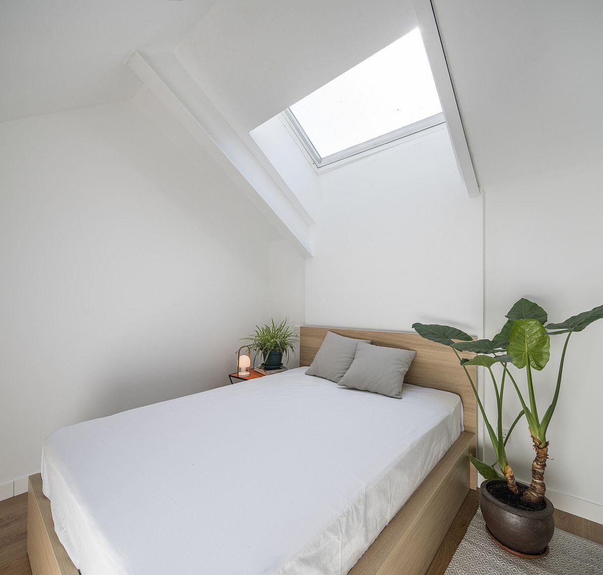 Hình ảnh phòng ngủ màu trắng chủ đạo, có cửa sổ trời, cây xanh lớn tạo điểm nhấn trang trí