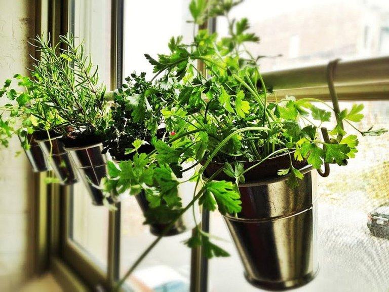 Hình ảnh loạt chậu cây gia vị treo trên cửa sổ phòng bếp