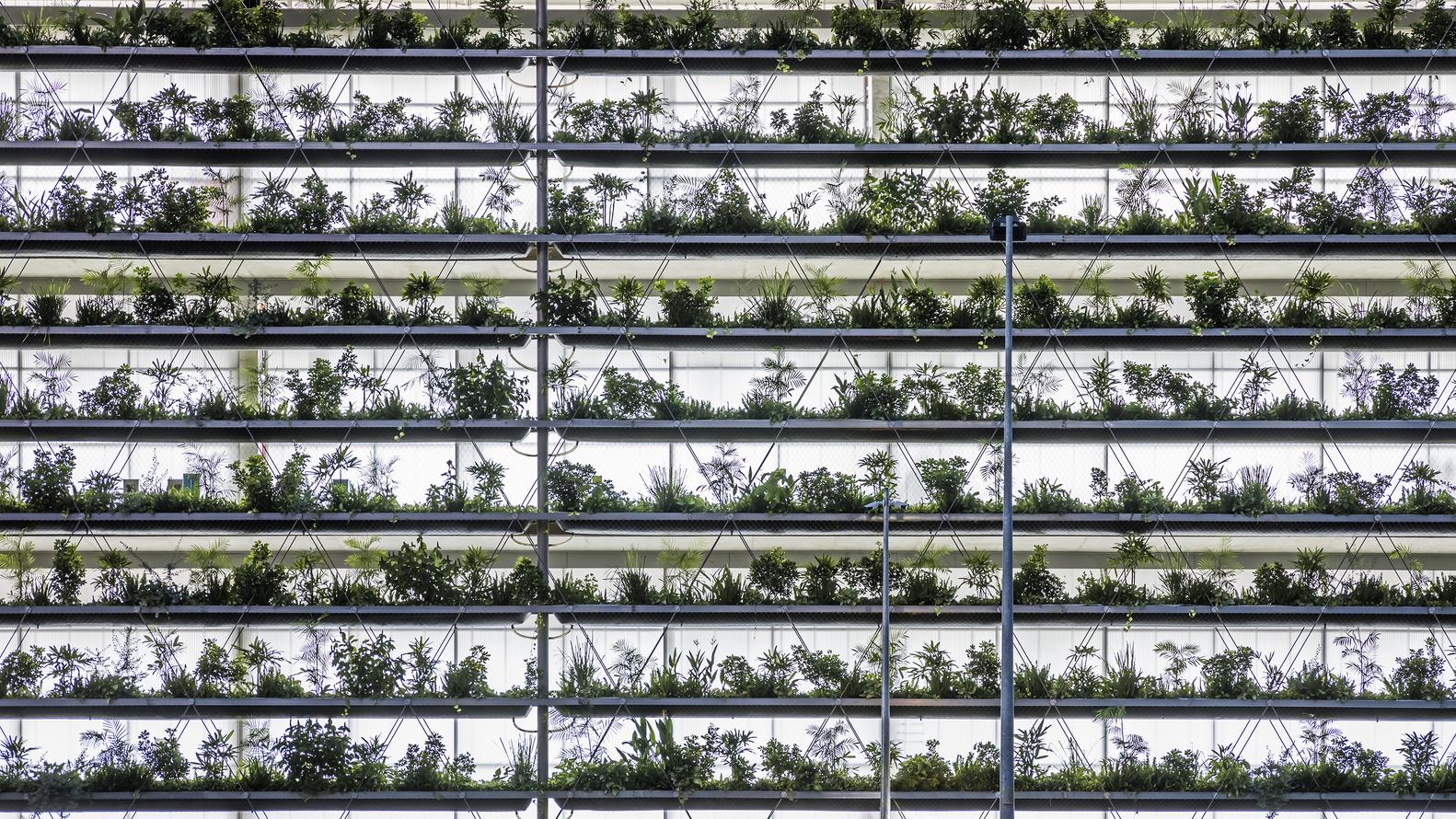 cận cảnh hệ thống giàn trồng cây xanh, cây bụi nhỏ