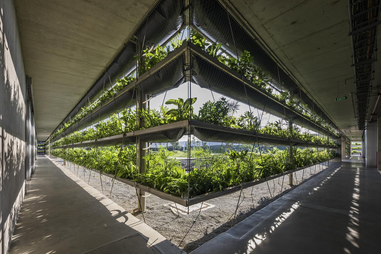cận cảnh các tầng trồng cây xanh