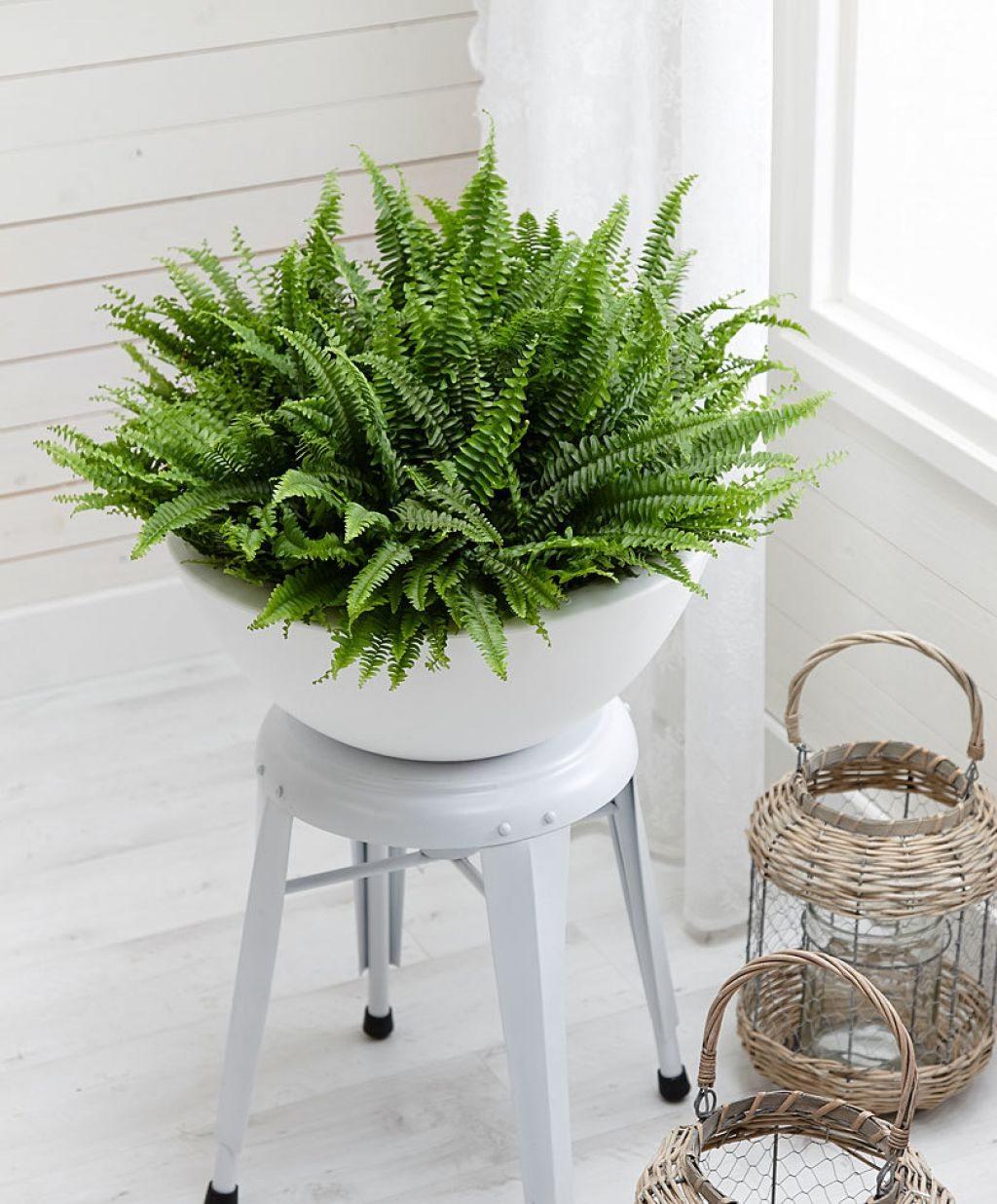 hình ảnh cận cảnh chậu cây dương xỉ đặt trên kệ màu trắng, cạnh đó là đèn nến với chụp đèn trong suốt
