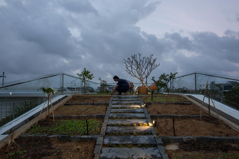 hình ảnh cận cảnh các ô đất trồng cây trên sân thượng