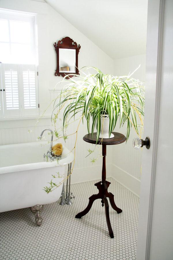 chậu cây dây nhện đặt trên giá phòng tắm