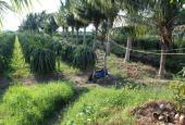 Bình Thuận - Vựa thanh long, 20 ngàn/m2, mặt tiền QL 1A, 1400 trụ