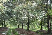 Bán vườn cây 4ha QL20 xã Hà Lâm, huyện Đạ Huoai, Lâm Đồng. Giá 4.7 tỷ TL