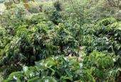 Cần bán trang trại tại xã Đắk Sin huyện Dăk R'Lấp tỉnh Đắk Nông, DT 4ha. Gía: 2,2 tỷ