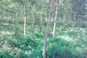 Bán đất Lâm Đồng, giá rẻ 138ha, 4,5 tỷ