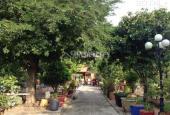 Bán nhà vườn đẹp 10.000 m2 nhiều cây ăn trái, ao xã Nhị Thành, Huyện Thủ Thừa, Long An giá 6 tỷ
