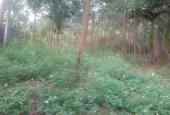 Cần bán lô đất mặt đường Liên Xã diện tích 987m2, giá rẻ 350 triệu